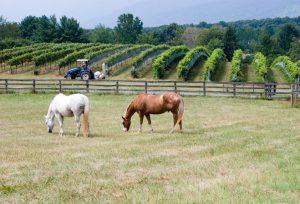 VA HORSE WINE
